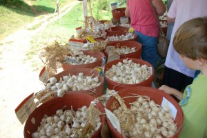 Garlic Fest  at Loganberry